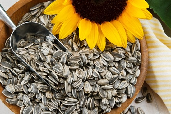 saulėgrąžų sėklų receptas sergant hipertenzija