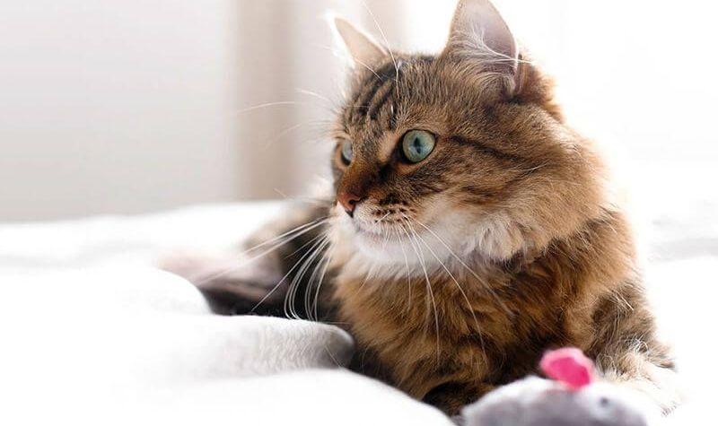 Kaip atpažinti, kad katė jaučia stresą
