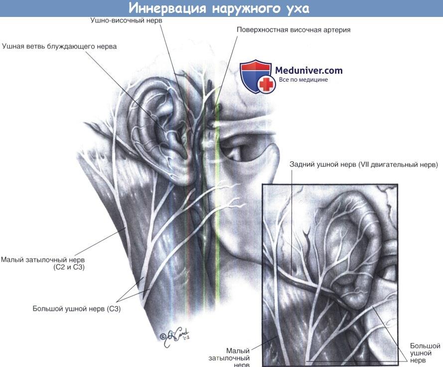 spengimas ausų hipertenzijoje