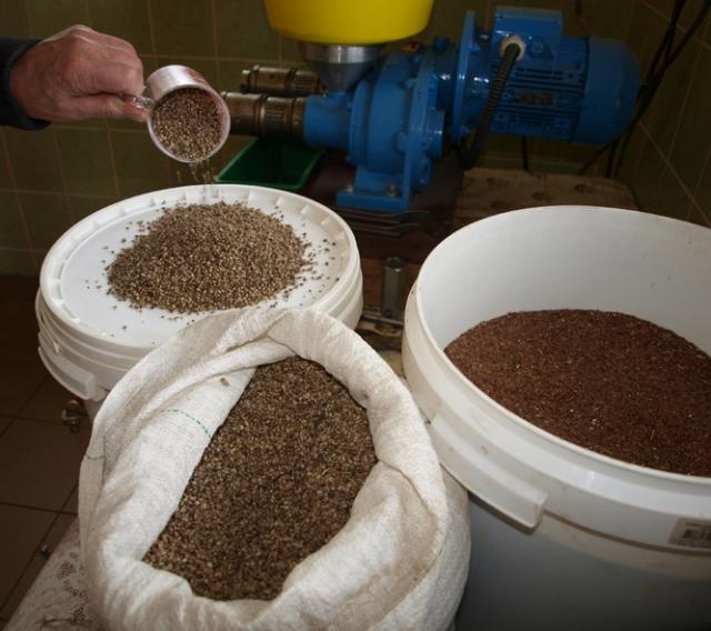 Kanapių sėklų aliejaus nauda: uždegimams, širdies sveikatai, diabetui