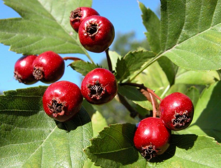 gyvenimo būdas su hipertenzija kokius maisto produktus vartoti hipertenzijai gydyti