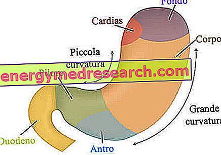 Pirmoji pagalba: Gastritas (skrandžio uždegimas) | taf.lt