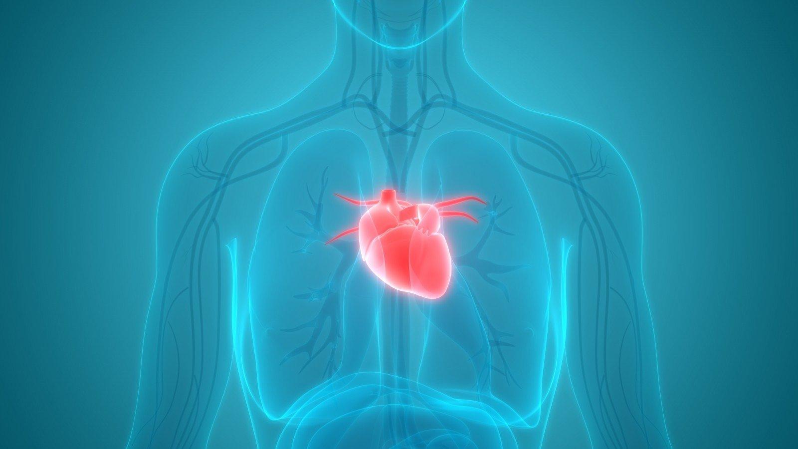 mankšta, susijusi su širdies sveikata