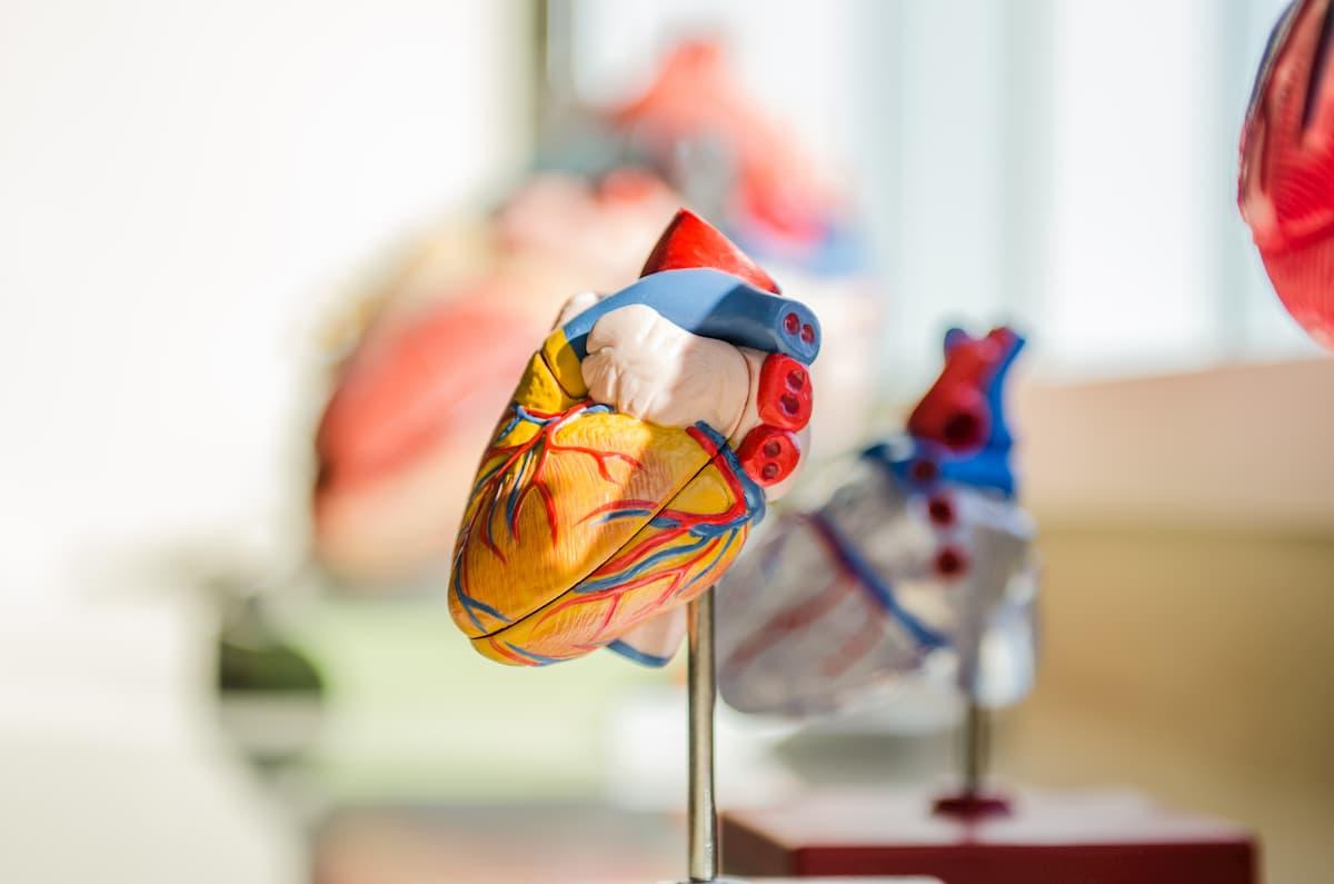 hipertenzija, kada sumažinti kraujospūdį Jonažolė ir hipertenzija