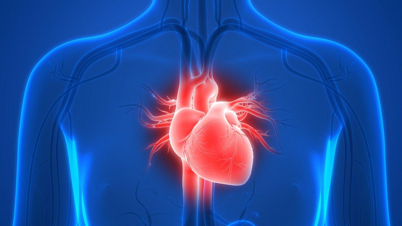 sveikatos širdies cirkuliacija