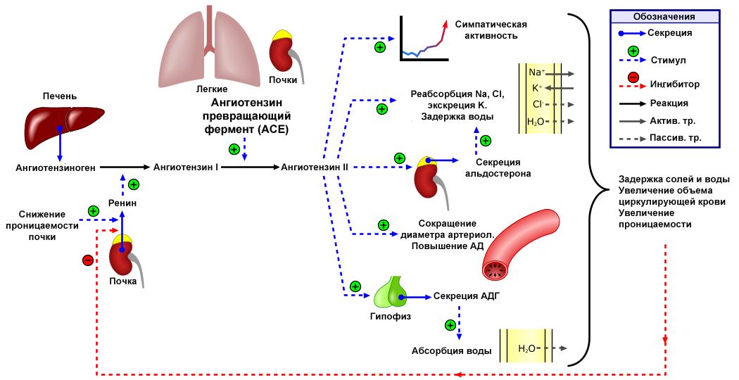 Olmesartanas ir deriniai: gydymo galimybės įvairiais arterinės hipertenzijos atvejais