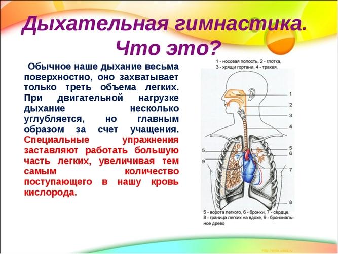 Kas yra hemorojus, ką ji atrodo ir kokio gydymo reikia? - Anatomija November