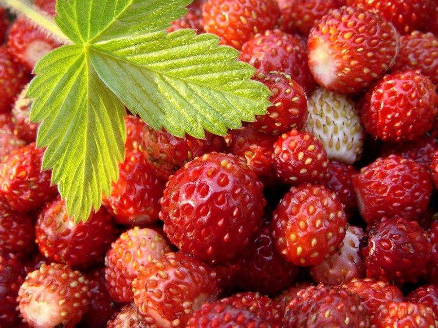 Apie mėgstamiausių vasaros uogų naudą – specialistės lūpomis - DELFI Maistas