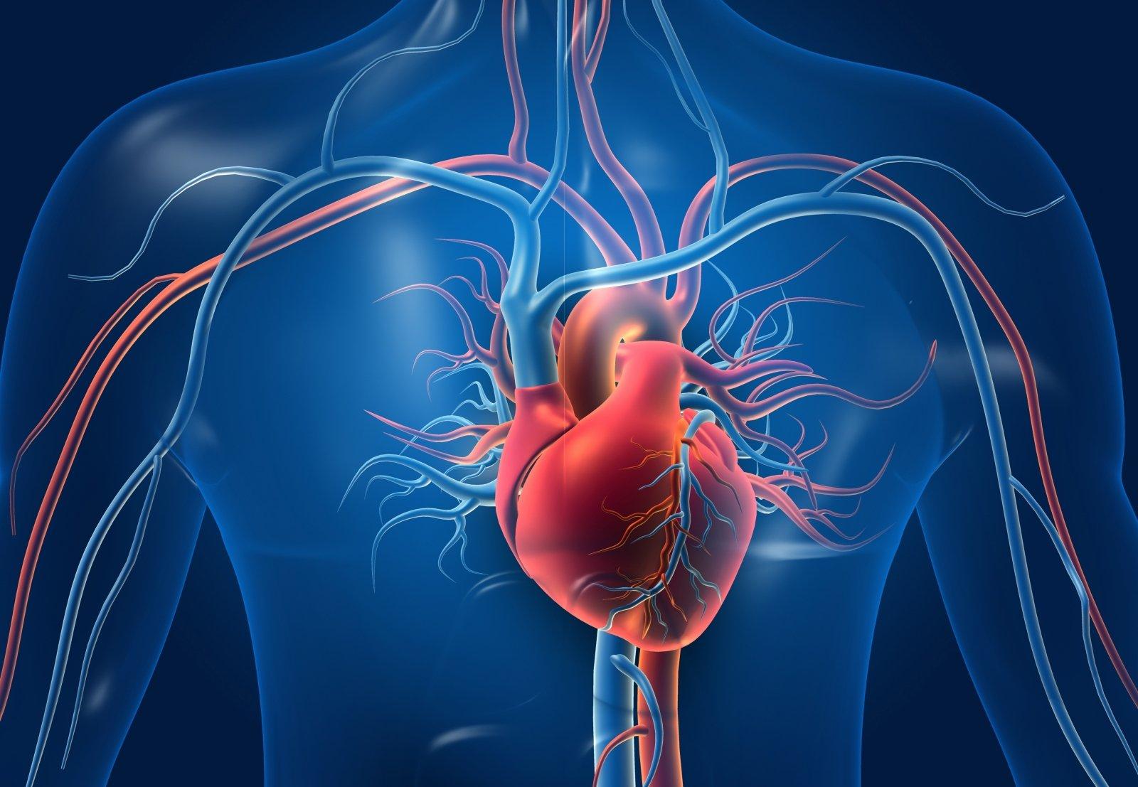 sočiųjų riebalų širdies sveikata