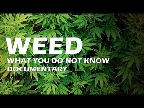 hipertenzija ir marihuana garstyčių hipertenzija