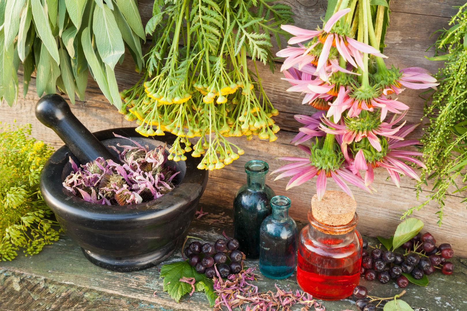vaistinis augalas, vartojamas hipertenzijai gydyti