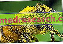Mūsų amžiaus rykštė – alergija: negalavimų gali sukelti ir kokosai, ir medus