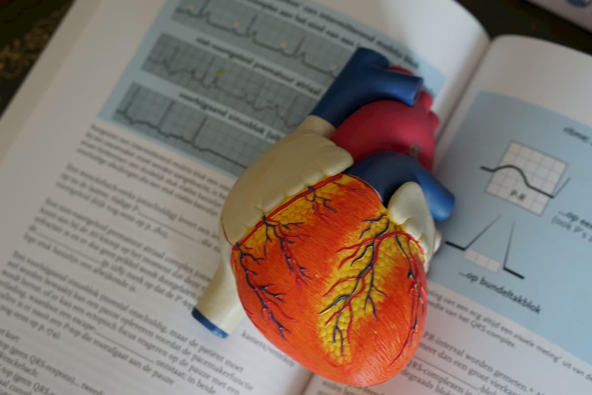 širdies hipertenzija yra normali