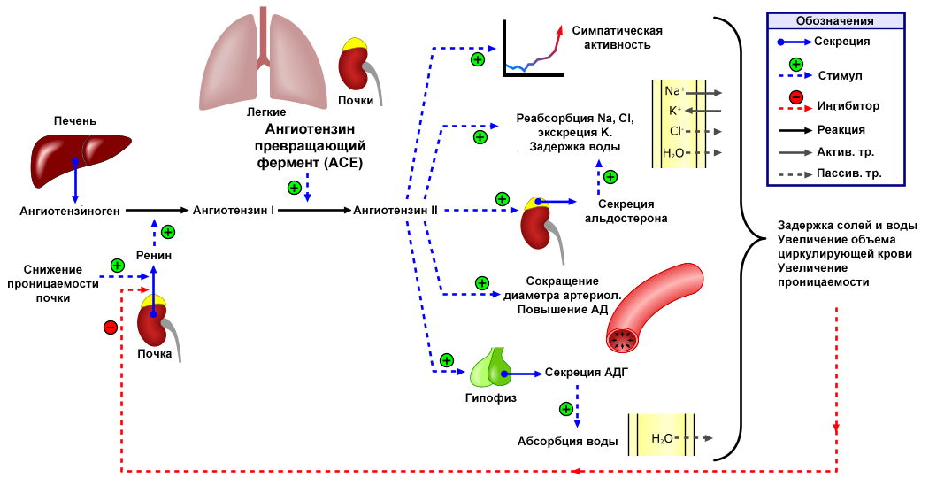 kaip amžinai įveikti hipertenziją