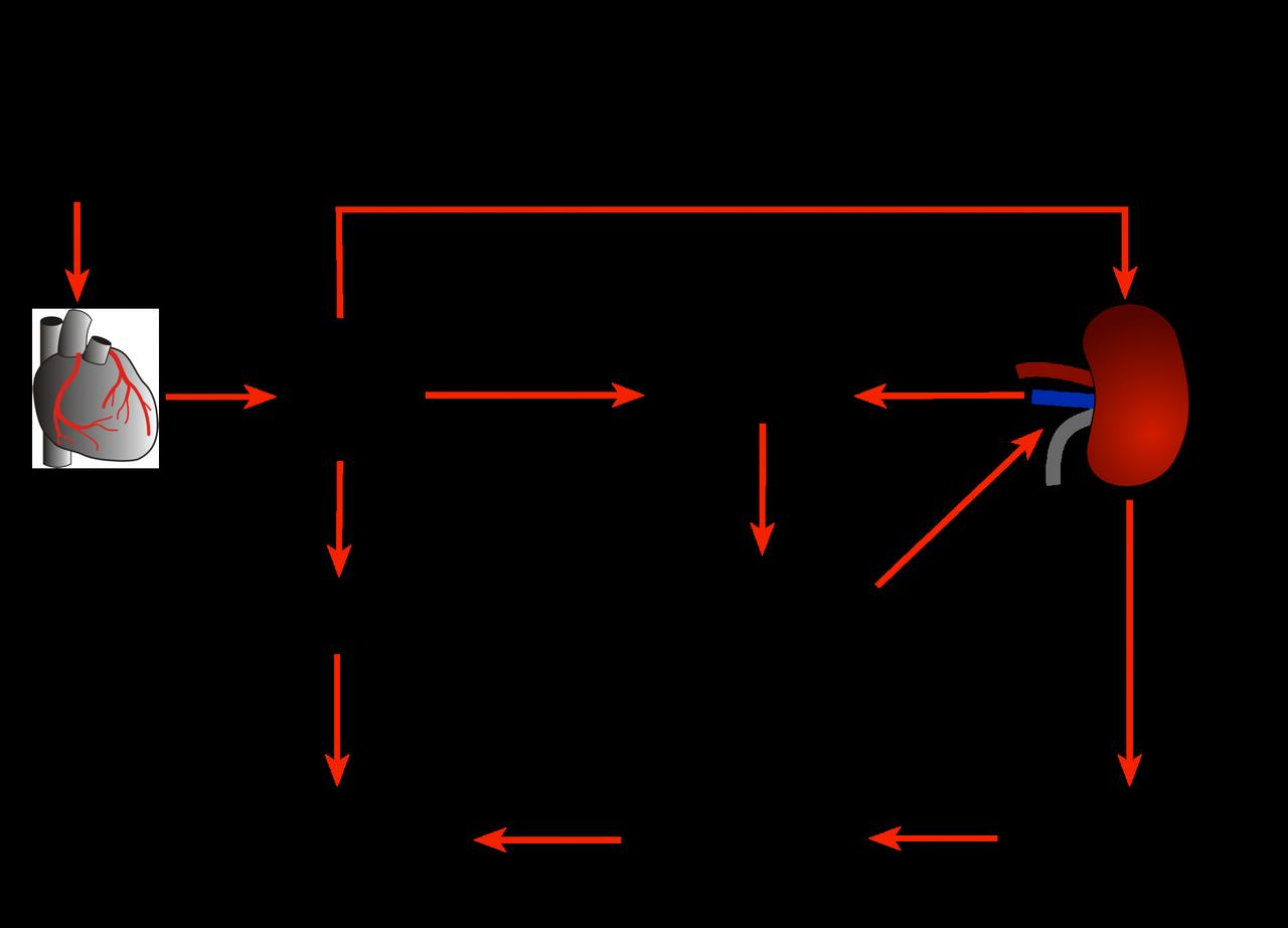 hipertenzija angiotenzinas 2