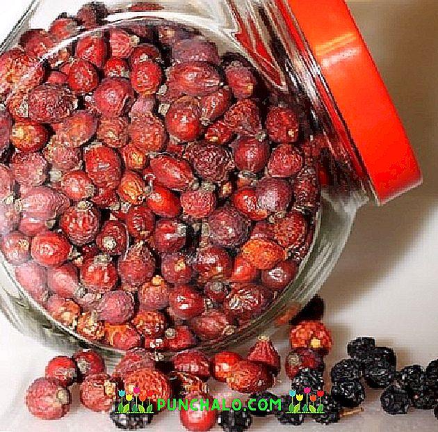 Gudobelių vaisiai – taf.lt