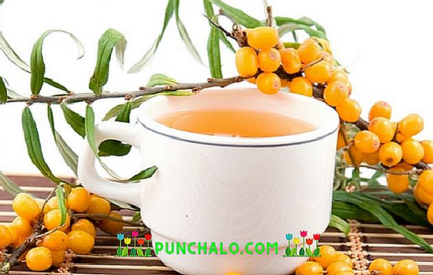 Kuo naudinga dilgėlių arbata? - taf.lt