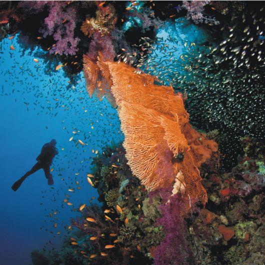 koralų klubas sergant hipertenzija urbechas nuo hipertenzijos