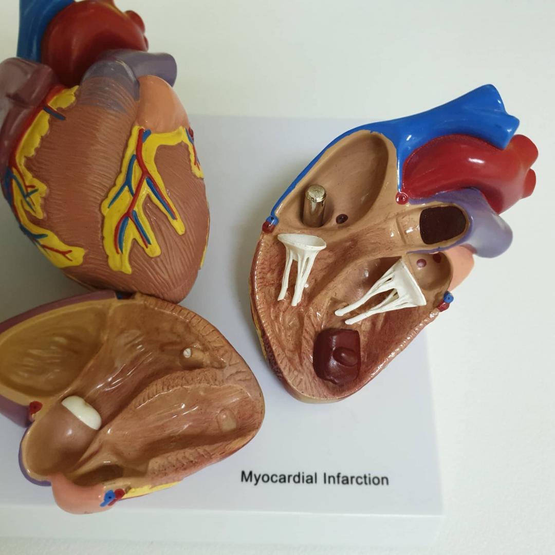 Vaistažolės širdžiai ir kraujagyslių sistemai
