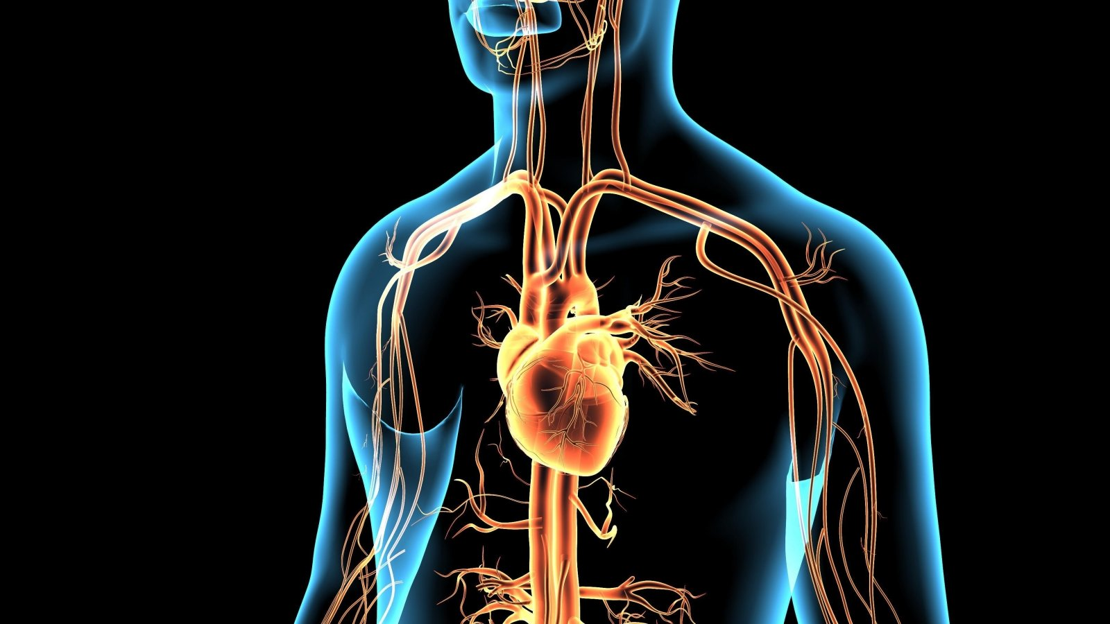 Širdies ir kraujagyslių ligos – Vilniaus visuomenės sveikatos biuras