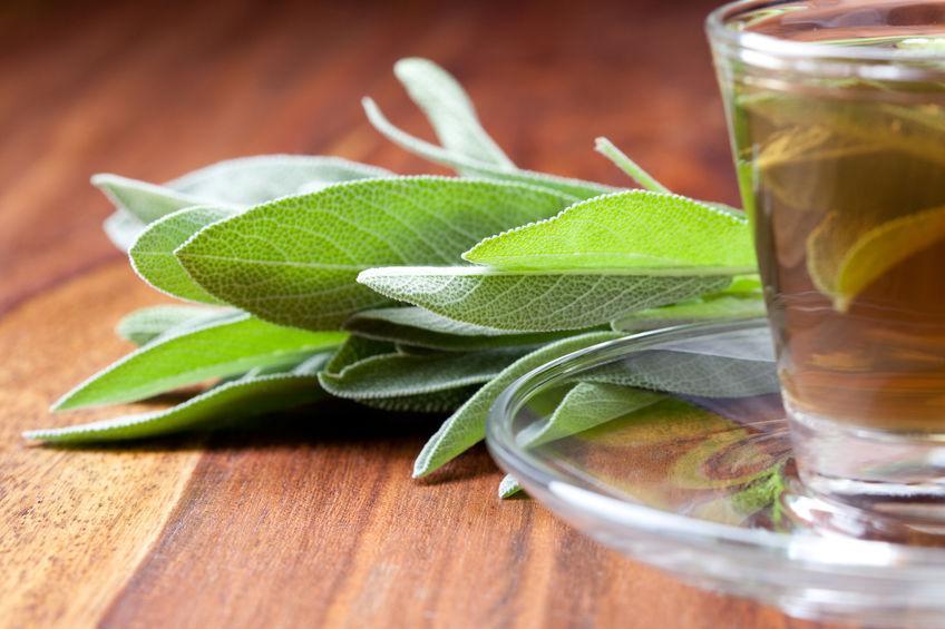 Kas padeda šalavijas - naudingos augalo savybės, taikymas kosmetologijoje ir tradicinė medicina