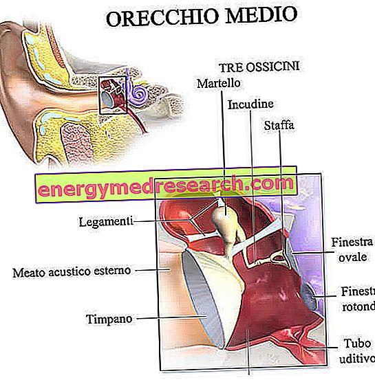 kraujas iš ausų su hipertenzija