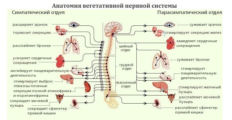 Kas yra hemorojus ir kaip ją gydyti? - Distonija November