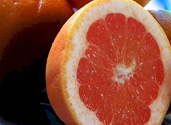 greipfrutai nuo hipertenzijos hipertenzija negydoma