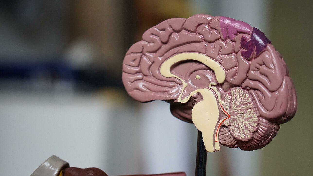 hipertenzija smegenų medžiaga