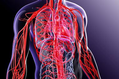 kaip gydyti kraujagyslių hipertenziją